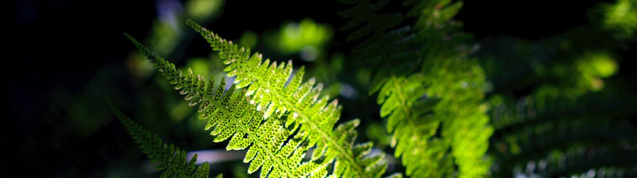 slider-oro-verde